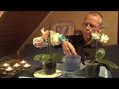 Orchideen einpflanzen, umtopfen ganz einfach - YouTube