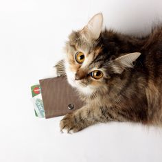 Cats love TRIO too ;)  #design #minimalism #leather #wallet #triowallet #menswear #style #inspiration #mensclothing #streetwear #luxury #bellroy #slim #accessories #cat