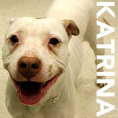 URGENT! Katrina needs to find a foster or forever home today! Call 585.428.7274 to meet her!