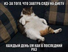 Диета страсти http://www.doctorate.ru/dieta-strasti/