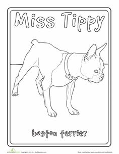 Worksheets: Boston Terrier Coloring Page