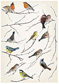 Brewster Komar Peel Stick Birds European Wall Decals Beautiful birds on dainty branches will fill your area along with charm. This applique features birds of all colors sitting on different branches, posi Bird Wall Decals, Bird Wall Art, Wall Stickers, Contemporary Wall Decals, Inspiration Artistique, Brewster Wallpaper, Wall Appliques, Bird Applique, Cool Walls