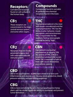 receptores #cannabinoides