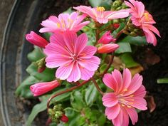 There are a variety of elements that you must focus on in terms of gardening, which means you must keep yourself well-informed with some helpful gardening tips. It can be hard to garden all by yourself, particularly if are inexperienced. Flowers Perennials, Planting Flowers, Organic Gardening, Gardening Tips, Wildwood Flower, Different Types Of Flowers, Flower Pictures, Tattoo Inspiration, Shrubs