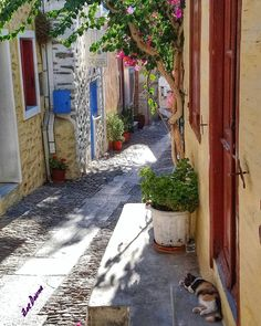 Syros, Kikladhes, Greece Syros Greece, Hydrating Foods, Greek Islands, Greece Travel, Herb Garden, Art Photography, Beautiful Places, Destinations, Places To Visit