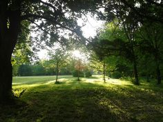 Green everywhere, Gödöllő