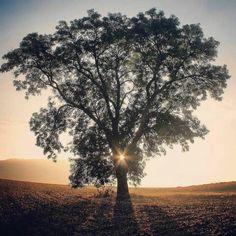 Umutlarımız bir ağaç gibi kök salsın yeşersin... Kalbimize huzur ve mutluluk ışığı sabah güneşi gibi açsın... Bizi kıranlar ve nazarlar bizden uzak olsun... Hayırlı cumalar olsun  #pray #home #dua #umut #prayer #sevgi #hamdolsun #şükür #grateful #innerjourney #nefes #love #huzur #peace #anlayış #hayırlıcumalar #friday