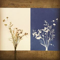 A print by @merelymere who worked with SSC to host a hands-on Cyanotype Print (also known as Sun Printing) Workshop in The Annex Courtyard recently. During this workshop, participants used clippings found in nature as well as their own objects to create custom prints using light sensitive paper and fabrics.
