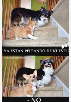 ¯(°_o)/¯ Ríe sin parar con memes a alianza lima, mazinger z gifs, imagenes graciosas de buenos dias para wasap, memes de trex en español y memes divertidos y groseros. ➡ http://www.diverint.com/imagenes-gifs-graciosos-bajando-estilo/