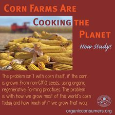 The industrial corn industry is not just polluting the environment with pesticides. All those cornfields also release large amounts of nitrous oxide (N2O), a greenhouse gas with nearly 300 times the heat-trapping power of carbon dioxide. #Ag #Food #Climate