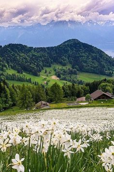 Today's picture comes from Sennarelax. The fluffy field of daffodils paired with the stunning mountainous backdrop of rural Switzerland reminds us of something out of Alice in Wonderland. Nature Aesthetic, Flower Aesthetic, Beautiful World, Beautiful Places, Beautiful Pictures, Landscape Photography, Nature Photography, Photography Tips, Portrait Photography