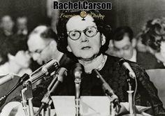 Rachel Carson: American Marine Biologist and Author via @learninghistory
