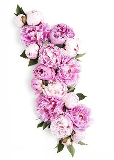 Pink Peony Styled Stock Photography for creative businesses. New in the shop: floral perfection!