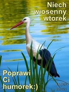 Weekend Humor, Night Quotes, Good Morning, Animals, Pump, Therapy, Tuesday, Polish, Buen Dia