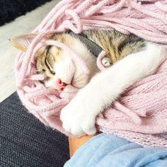 Hora de la siesta