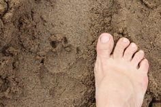 Fresh hyena 'spoor' which is Afrikaans for animal tracks. Wilderness Trail, Animal Tracks, Hyena, Afrikaans, Africa Travel, Safari, Tours, Fresh, Adventure