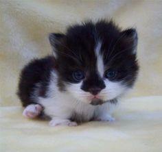 http://www.pinterest.com/backyardwillow/cats-are-kids-too/