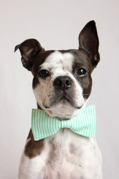 Mint Green and white Striped Dog Bowtie by littlebluefeather, $12.25 // LOVE!