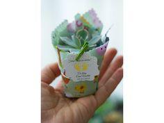 Suculente in panza imprimata Plant
