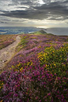 coastal path, Exmoor National Park, near Combe Martin, Devon, England | David Noton Photography