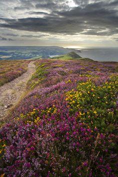 coastal path, Exmoor National Park, near Combe Martin, Devon, England | David Noton Photography