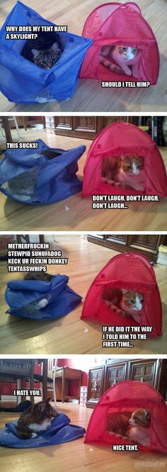 Cats and tents