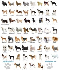 Small Dog Breeds Chart - Jaddid - Hd Wallpapers, Backgrounds on Amazing Dog Photo Ideas 3662 Small Dog Breeds Chart, Dog Chart, Large Dog Breeds, Best Dog Breeds, Puppy Breeds, Best Dogs, Dog Breeds List Of, Types Of Dogs Breeds, Terrier Breeds