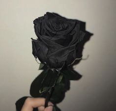 Image uploaded by KindaWeird. Find images and videos about black, flowers and rose on We Heart It - the app to get lost in what you love. Aesthetic Colors, Aesthetic Grunge, Aesthetic Photo, Aesthetic Pictures, Aesthetic Art, Black Aesthetic Wallpaper, Black Wallpaper, Black And White Aesthetic, Black Love