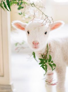 ♥ Wedding Sparrow ~ Spring Bridal Inspiration With A Baby Lamb ~ Photo by Kristen Lynne Photography. Cute Baby Animals, Farm Animals, Animals And Pets, Funny Animals, Beautiful Creatures, Animals Beautiful, Beautiful Images, Baby Lamb, Sheep And Lamb