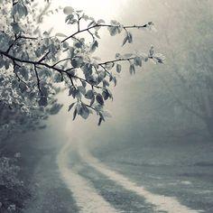 Foggy road - nick lisitsin