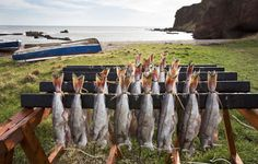 The Arbroath smokie is a type of smoked haddock – a speciality of the town of Arbroath in Angus, Scotland.