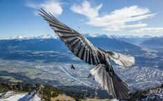 птица, birds, полет, animal, flight, wondrous