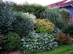 buskplantering i slänt – Google Sök Cottage, Plants, Garden, Cottage Garden, Outdoor, Outdoor Gardens