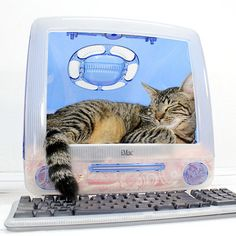 I like my cats hi-tech.  iMac Snooze [by atomic attic]