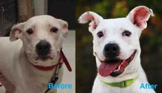 This is Olive, she is a rescue at Second Chance. here& This is Olive, she is a rescue at Second Chance…. here& her before and af… This is Olive, she is a rescue at Second Chance…. here& her before and after pic… so much happier - Shelter Dogs, Animal Shelter, Animal Rescue, Animals And Pets, Cute Animals, Dog Sounds, Good Cause, Cute Faces, Animal Photography