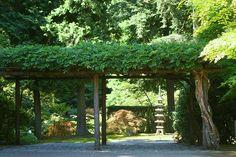 1_wisteria_entrance | by kelly_k