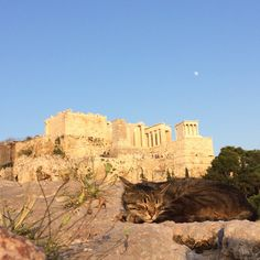 "newfavething:cat snoozing in front of the Acropolis | Areopagus, Athens | June 2017 ""cat snoozing in front of the Acropolis 