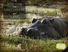 Hoy hemos leído esta frase en un blog amigo llamado unplaninfinito.com y nos gustaría compartirla con todos vosotros con esta curiosa imagen que tomamos en un lugar de ensueño para nosotros: El Delta del Okavango  www.muchomasqueunviaje.com