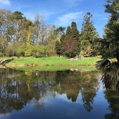 #tylneyhall #tylney #gardens #walking #spring