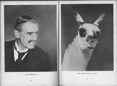 Chamberlain and the Beautiful Llama , 1940 by Stefan Lorant Mark Hill, Antiques Roadshow, History Of Photography, No Name, Photojournalism, Magazine Design, Movie Posters, Painting, Animals