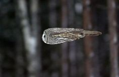 Coolest owl image ever! Thank you, Necole Cooper Cameron -