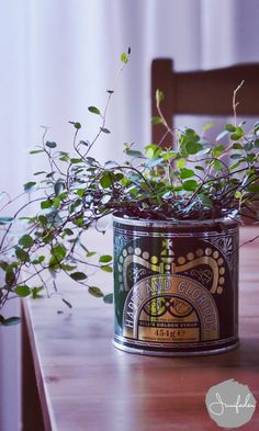 How to dress up your plants Potted Plants, Garden Plants, Indoor Plants, House Plants, Indoor Garden, Home And Garden, Organic Gardening Tips, Growing Herbs, Green Life