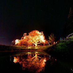 【typemoto】さんのInstagramをピンしています。 《おはようございます。 週の始まり月曜日ですが、天気はイマイチなのでしょうか。 そろそろ仕事の方も年度末モードに入らないといけないのですが。  今朝もアルバムから #浅井の一本桜 の写真です。  #久留米 #team_jp_西 #picturekeep_nature #icu_japan #cooljapan #instagramjapan #lovers_nippon #wu_japan #loves_nippon #tokyocameraclub #空 #sky #instasky #カコソラ #綺麗 #beautiful #amazing #awesome #japan_night_view #sakura #桜 #リフレクション #reflections》