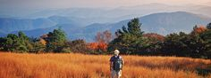 Fall foliage report for Asheville Hiker at Mt. Mitchell