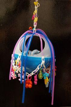 Sugar Glider Toys, Sugar Gliders, Sugar Bears, Parrots, Birds, Ebay, Products, Parrot, Bird