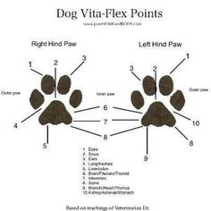 Dog #VitaFlex Points Chart YL essential oils are safe to use on your #pets, remember to dilute in some cases! #yleo #youngliving #essentialoils #essential #oils #dog