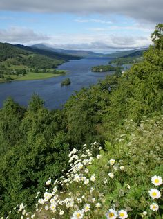 Daisies Queens View Loch Tummel, Scotland