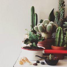 caractériELLE: Des minis cactus multicolores..