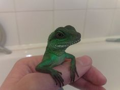 """Chinese Water Dragon    by Louise Muir  (just held one of these sweeties today - they wave """"hi"""" to show dominance...eeeee)"""