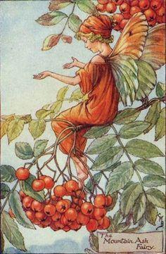 The Mountain Ash Fairy - Cicely Mary Barker